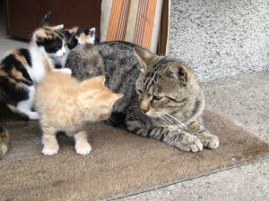 kitten_facing_an_older_cat